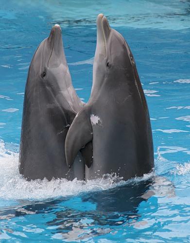 delfin2-den