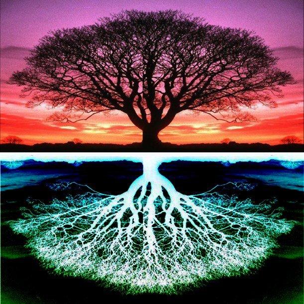 rod.-drevo