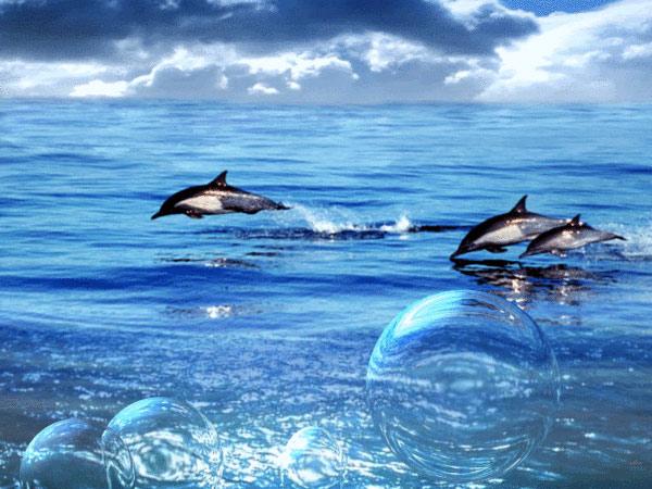 delfiny-shary