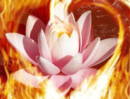 lotos-v-ogne
