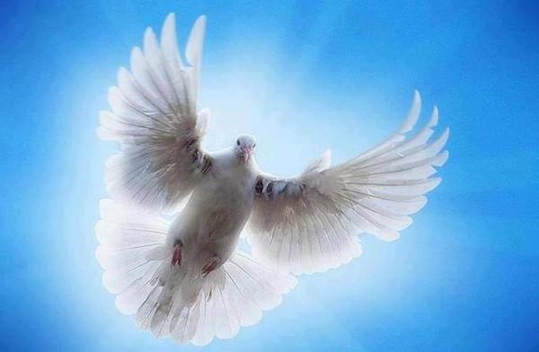 golub-v-svete