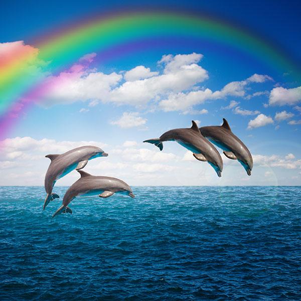 pryzhki-delfiny-morskoj-pejzazh-raduga